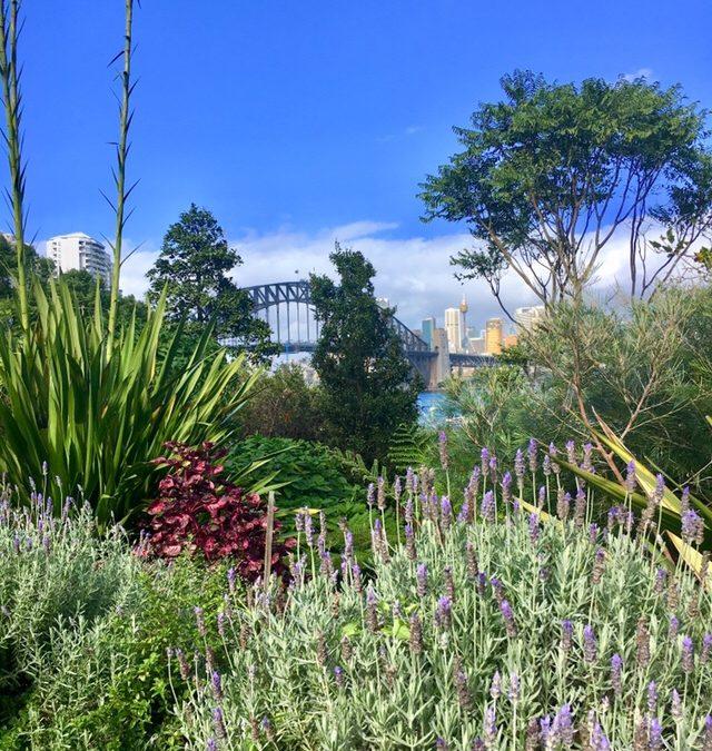 Lavender Bay – Sydney – e seu jardim secreto