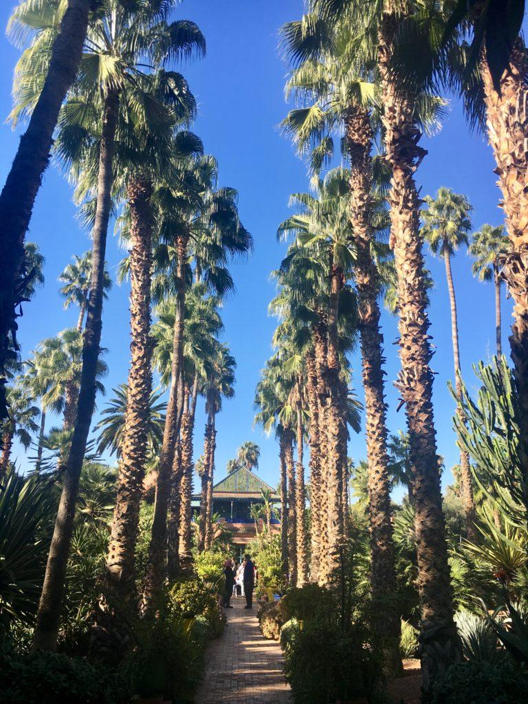 Alameda de palmeiras imperiais no Jardim Majorelle